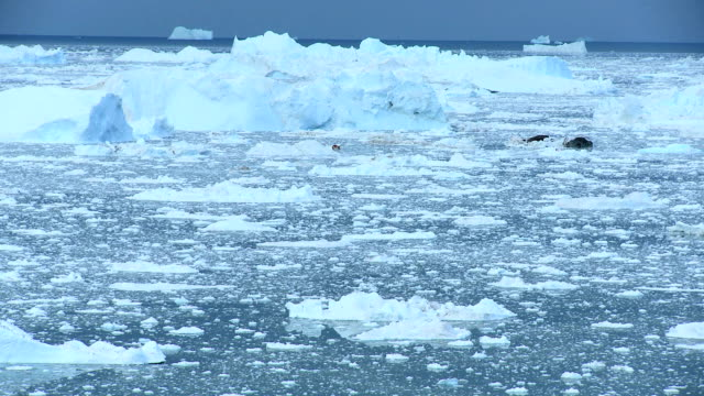 Time lapse Disko Bay Ice Floes, Greenland Time lapse view of Disko Bay ice floes and large icebergs arctic region  icecap stock videos & royalty-free footage