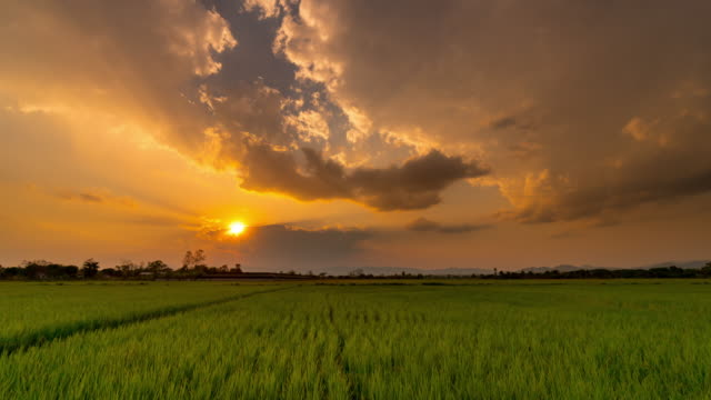 4K Time lapse : field in morning and sunrise video