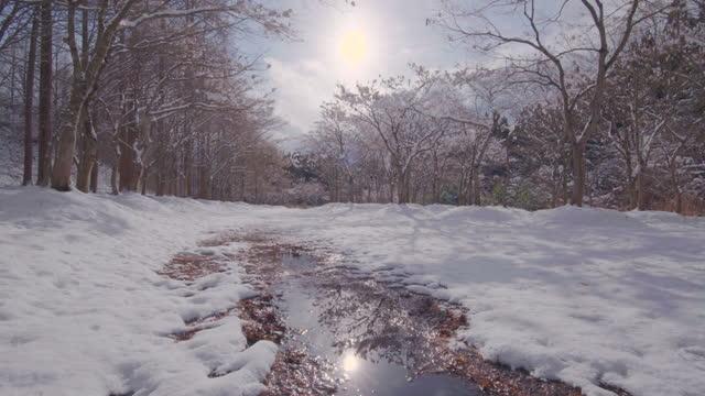 冬のタイムラプスフォレスト、暖かいバージョン - 霜点の映像素材/bロール