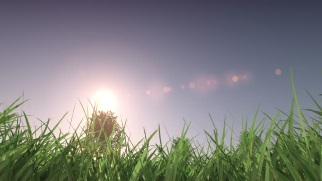 vídeos y material grabado en eventos de stock de lapso de tiempo desde el amanecer hasta el ocaso en un verde prado con hierba verde en frente hermoso lapso desde el amanecer hasta el ocaso en un prado verde con verde en frente de la hierba y los árboles en el fondo. vista de ángulo bajo. animación 3d - hierba planta
