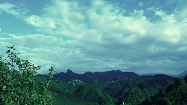 Time Lapse Green forest landscape and clouds