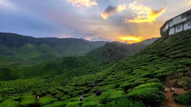 time lapse HD footage of a beautiful sunset at Bharat Tea Plantation video
