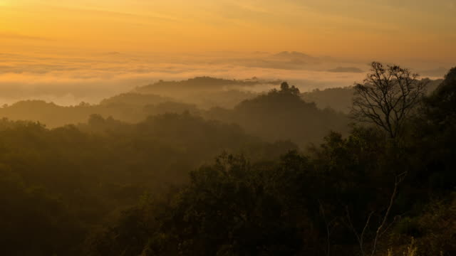 Time lapse high above forest landscape at sunrise with thick fog video