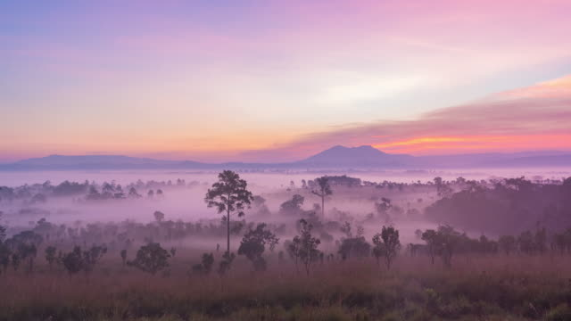 4k time lapse : in the morning meadow pine forest at thung salaeng luang national park, phitsanulok province, thailand - дождевой лес стоковые видео и кадры b-roll
