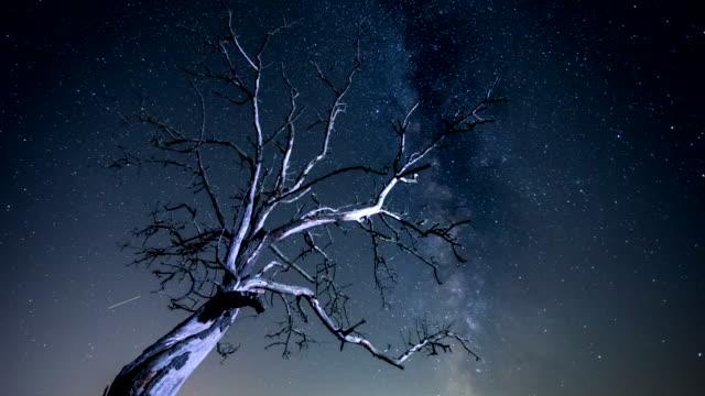 Time lapse - Milky Way Tree