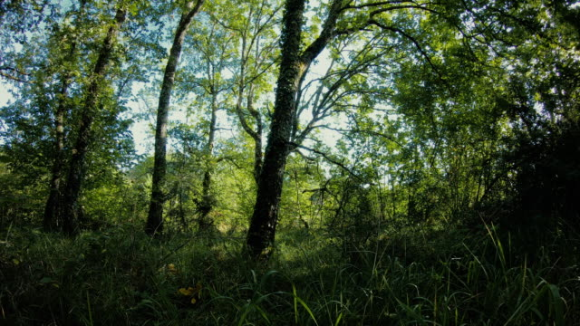 Time lapse of a summers day in the middle of woodland as light and shadows move around the trees