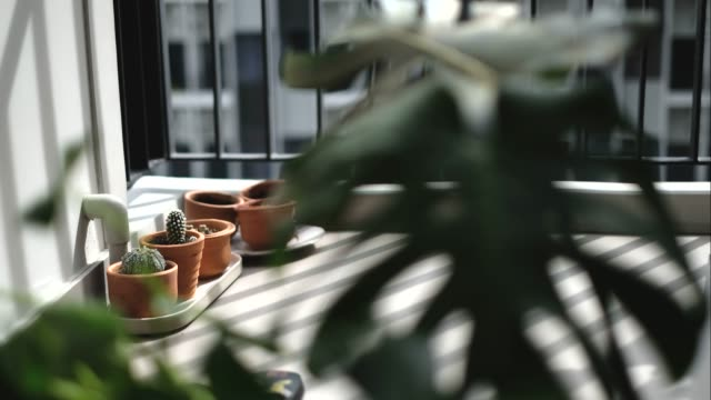 Time lapse of afternoon sun light shadows moving across a Green Cactus In brown pots in terrace condomunium balcony 4k