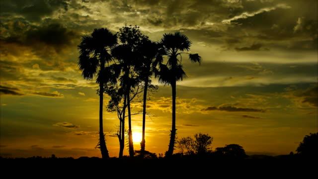 vídeos y material grabado en eventos de stock de time lapse of amazing colorful skies with the palm tree silhouette in the countryside of thailand. - espacio y astronomía