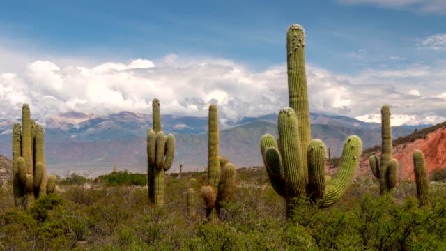 upływ czasu wielkich zielonych kaktusów z górami i chmurami na tle. park narodowy los cardones, salta, argentyna. uhd 4k - argentyna filmów i materiałów b-roll