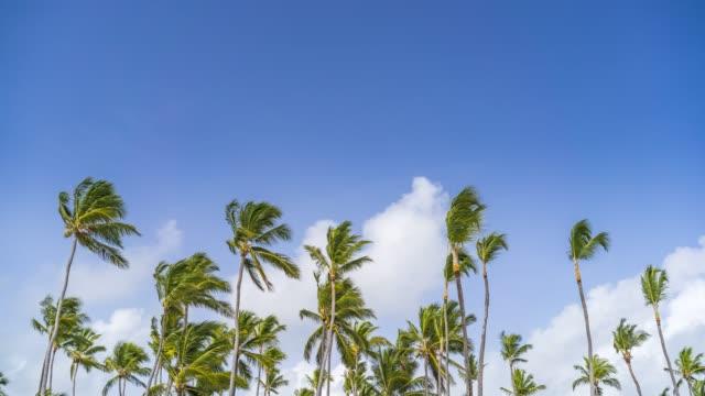 stockvideo's en b-roll-footage met time lapse van wolken in een blauwe hemel over palmbomen in dominicaanse republiek - caraïbische zee