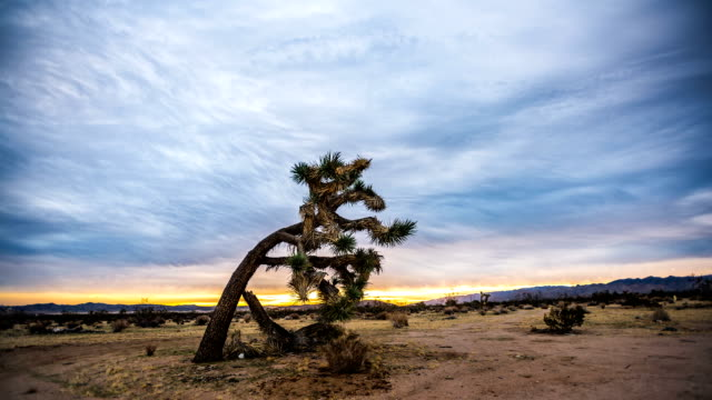 Time lapse of clouds moving in Joshua Tree desert Time lapse of cumulus clouds moving across the desert sky framed by a lone Joshua Tree. mojave desert stock videos & royalty-free footage