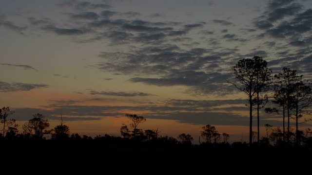 Time lapse of east horizon though forest before sunrise with sky brightening to bright white
