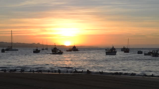 vídeos de stock e filmes b-roll de time lapse of flock of seagulls at dawn at ribeiro beach, cascais, portugal with fishing boats in background - fishman
