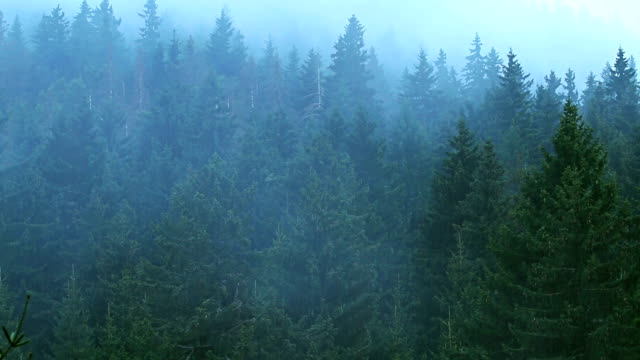 Time lapse of fog rolling in over the hills forest video