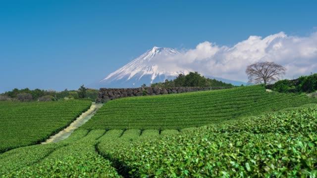 vídeos de stock, filmes e b-roll de lapso de tempo de campos do chá verde e de montanhas de fuji em japão. - cena não urbana