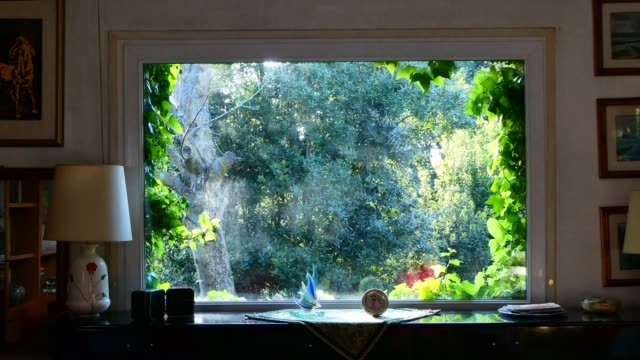 vídeos de stock e filmes b-roll de time lapse of large window with ivy leaves on the edges at sunset - hera trepadeira