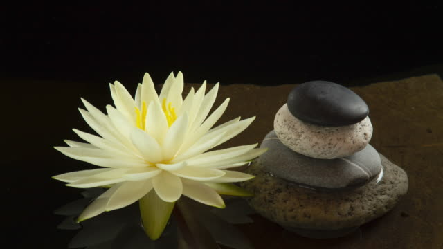 Time lapse of lotus water lily flower opening near balance pebble stones