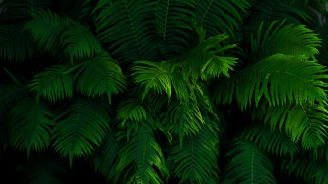 time lapse of lush foliage of the fern