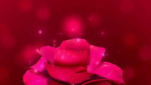 tidsinställd öppna röd ros på röd bakgrund. celebration bakgrund. - ros bildbanksvideor och videomaterial från bakom kulisserna