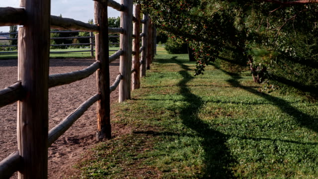 Time lapse of operating horse-breeding farm surrounded by a wooden fence and trees. video