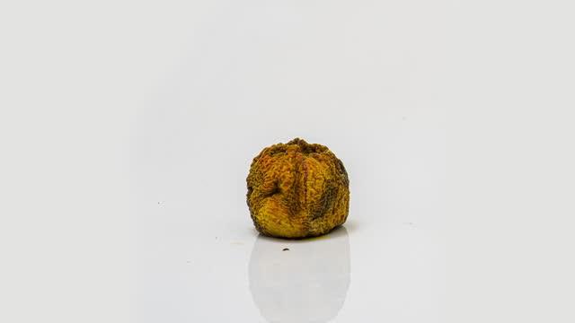 zeitraffer der pfirsichfäule auf weißem hintergrund, der prozess der zersetzung und zerfall, aufnahmezeit 10 tage - verfault stock-videos und b-roll-filmmaterial