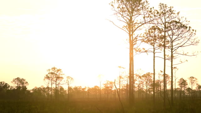 Time lapse of rising sun over forest with sky brightening to almost white