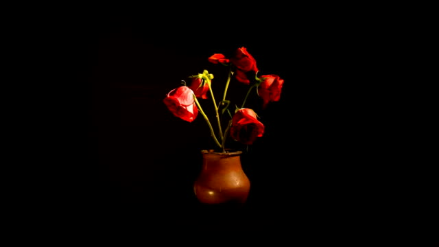 time lapse of roses wilting - morte video stock e b–roll