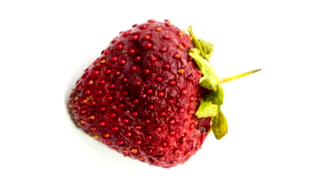 zeitraffer von erdbeeren, die über weißem hintergrund verrotten. - verfault stock-videos und b-roll-filmmaterial