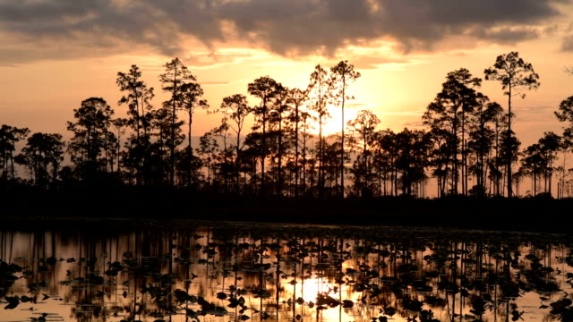Time lapse of sun setting though clouds behind lakeside pine forest