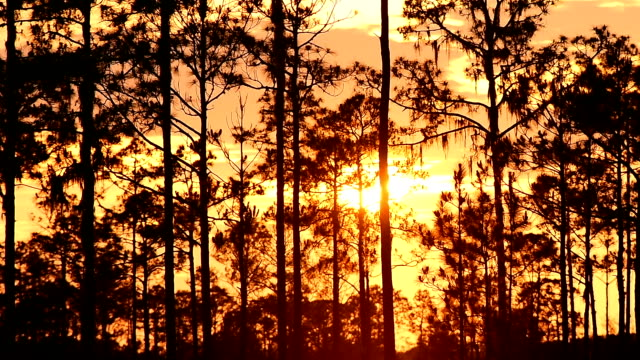 Time lapse of sun setting though clouds behind pine forest