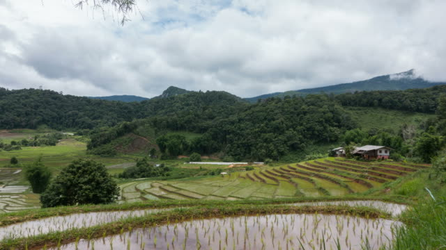 Time lapse of white clouds over rice terrace. video