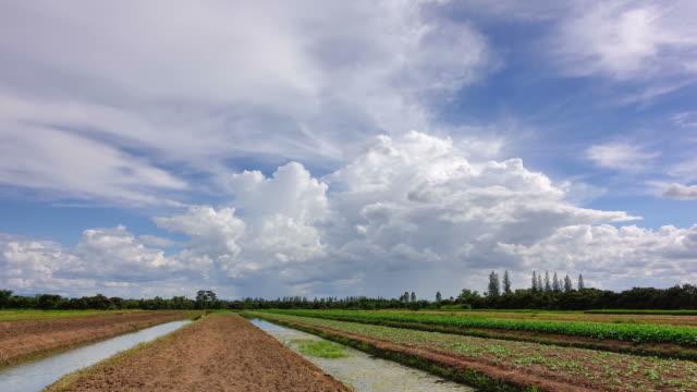 時間の経過の野菜プロットの青い空と白い雲。 ビデオ