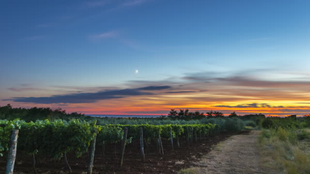 Time Lapse os sunset over vineyard