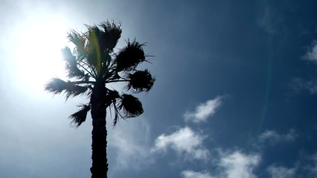 Time Lapse - Palm Tree Backlit video