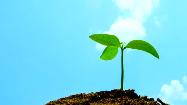 time-lapse verfrissende jonge boom op droge soid video