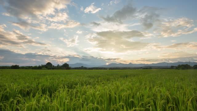 4 k time lapse (低速度撮影):ライスフィールドと美しいサンセット。 - 水田点の映像素材/bロール
