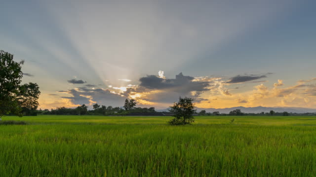 4K Time lapse rice field and sky sunset at Chiang mai, Thailand. video