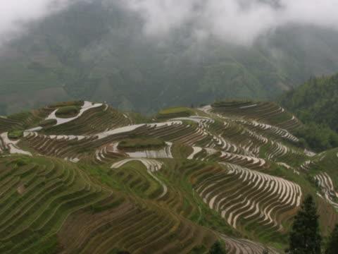 upływ czasu. ryżu pola longsheng, guilin, chiny ntsc - longji tetian filmów i materiałów b-roll