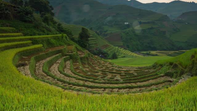 4k poklatkowy : pola ryżowe na tarasie wietnam - piękne tarasowe pole ryżowe w sezonie zbiorów w zachodzie słońca w mu cang chai - taras ryżowy filmów i materiałów b-roll