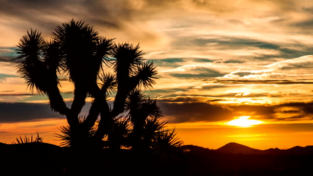Time Lapse - Sunrise over Joshua Tree with Beautiful Cloudscape Time Lapse - Sunrise over Joshua Tree with Beautiful Cloudscape mojave desert stock videos & royalty-free footage