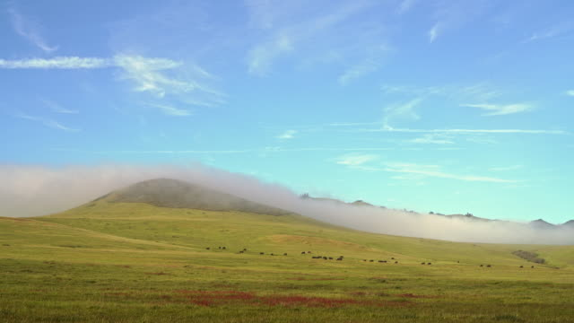Time lapse. The low cloud coming from the Pacific Ocean around the hills in San Simeon, California, nearby Cabrillo Highway, and Arroyo Del Oso. The windy sunny spring day.