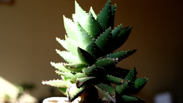 time lapse Change of sunshine in pots potted plant stock videos & royalty-free footage