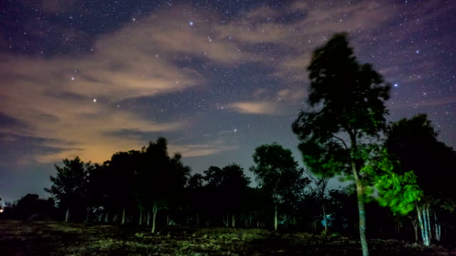 Time Lapse Video: Moving Star and Night Sky in Forest video