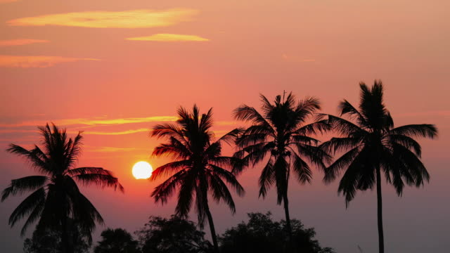 Time lapse view of coconut tree with during at sunset. Time lapse view of coconut tree with during at sunset. pacific islands stock videos & royalty-free footage
