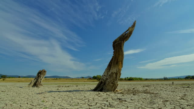 Time lapse with death tree and drought disaster, dry soil. Climate change, global warming video
