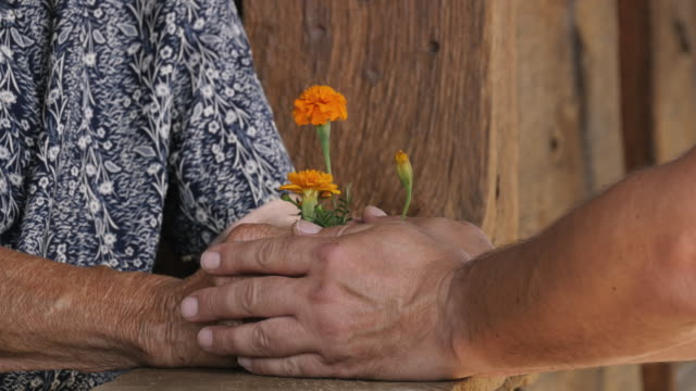 A Time of Giving. Detail of a Senior Woman Hands with Flower video