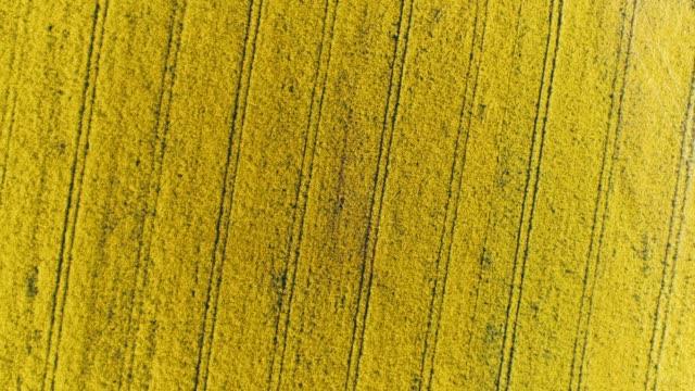 vídeos de stock, filmes e b-roll de agricultor de ponto de vista do time warp drone dormindo em campo canola amarelo ensolarado, rural - estilo de vida dos abastados