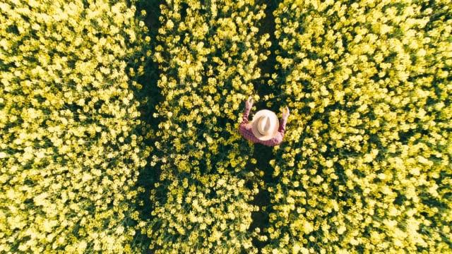 time warp drone punto di vista contadino che cammina nel soleggiato campo di canola gialla rurale. - canola video stock e b–roll