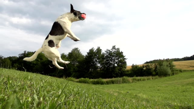 HD SUPER SLOW-MO: Time Warp Shot Of An Acrobatic Dog video