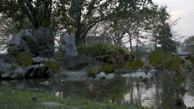 timelaps of pond plants in the university from yuntech, taiwan - giardino botanico video stock e b–roll